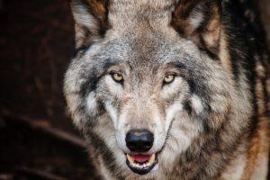 Waldis Hundetraining