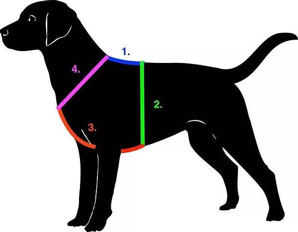 Hund - Messanleitung Für Hundegeschirr